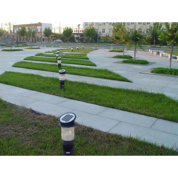 园区草坪绿化建设